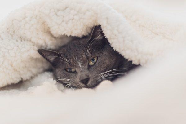 毛布 クリーニング
